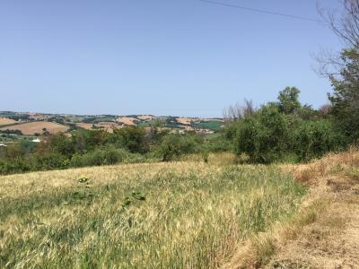 Terreno Agricolo in Vendita a Corinaldo
