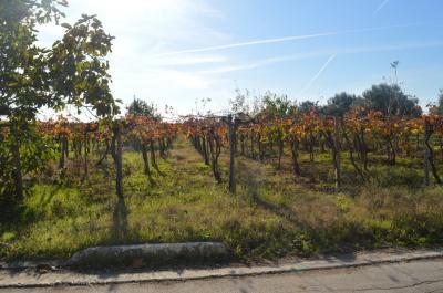 AGRICOLO/EDIFICABILE in Vendita a Casalbordino