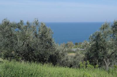 AGRICOLO/EDIFICABILE in Vendita a Vasto